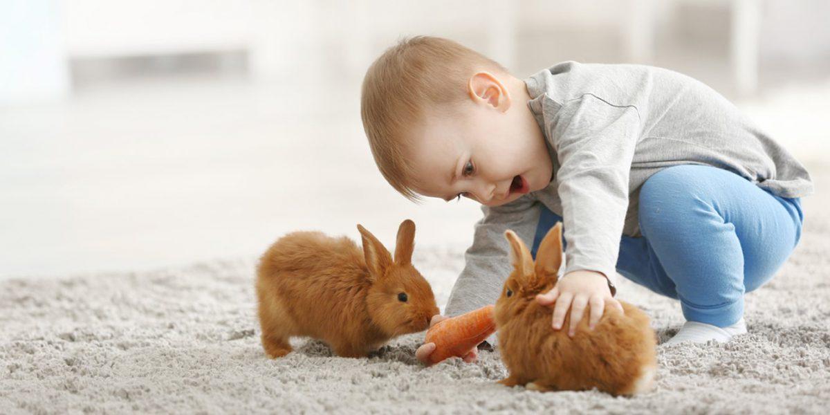 بازی پسربچه با خرگوش هایش