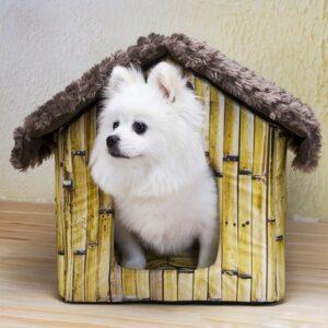 سگ اشپیتر داخل خونه کوچکش