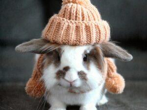 خرگوش شالو کلاه به سر