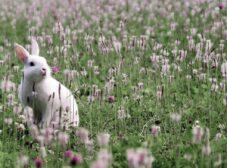 هر آنچه باید در مورد نگهداری خرگوش خانگی بدانید (خرگوش معمولی، لوپ، مینیاتوری)