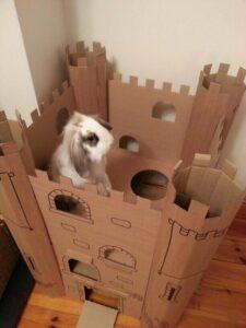 قلعه کارتونی خرگوش