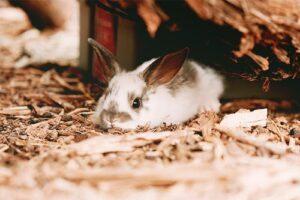 خرگوش اروم