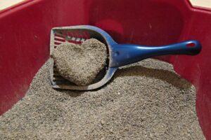 خاک توده شونده مناسب گربه