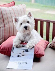 سگ وست هایلند تریر