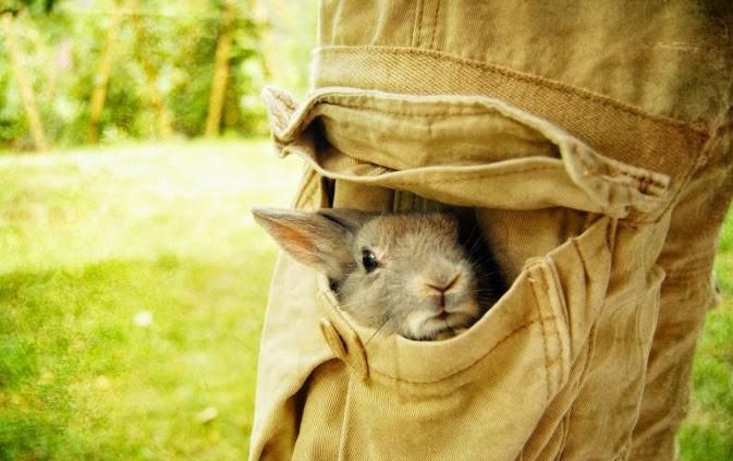خرگوش در جیب شلوار