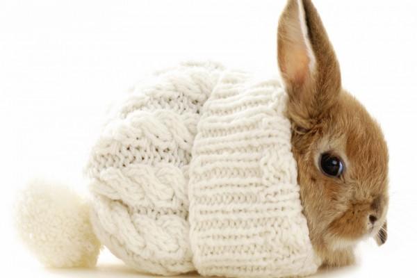بچه خرگوش داخل کلاه بافتنی