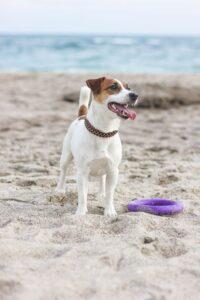 سگ تریر کنار ساحل