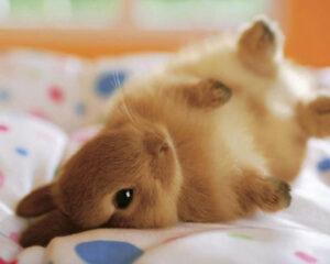 درتز کشیدن خرگوش
