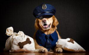 سگ پلیسی گلدن رتریور