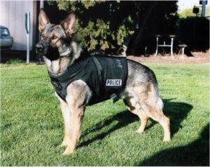سگ ژرمن شپرد پلیس