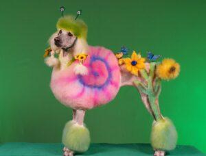 عکس سگ پودل