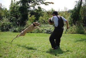حمله سگ نگهبان