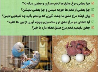 راهنمای پرورش مرغ عشق