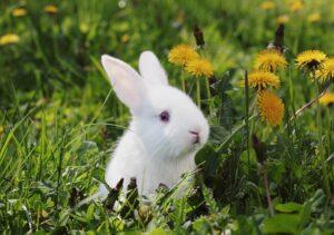 خرگوش در میان گل های زرد