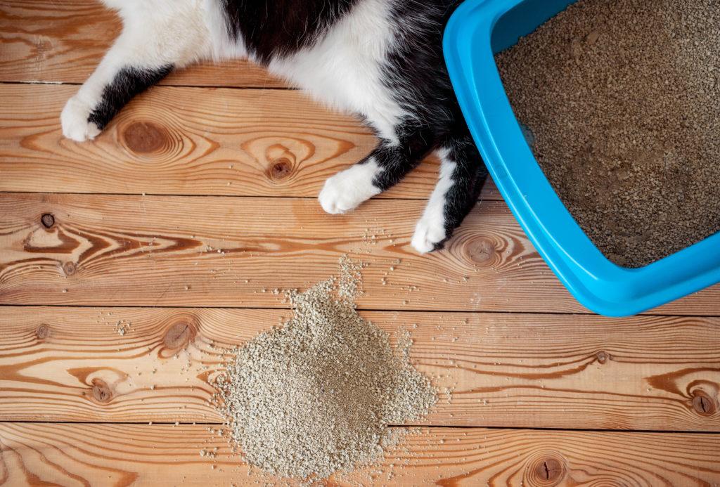 راهنمای خرید خاک گربه از پت شاپ (انواع + تفاوتها + مزایا و معایب)