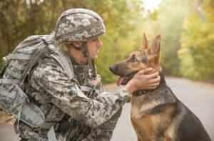 سگ ارتش