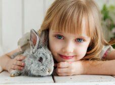 چطور به خرگوش آموزش بدیم؟ (راهنمای تربیت خرگوش)