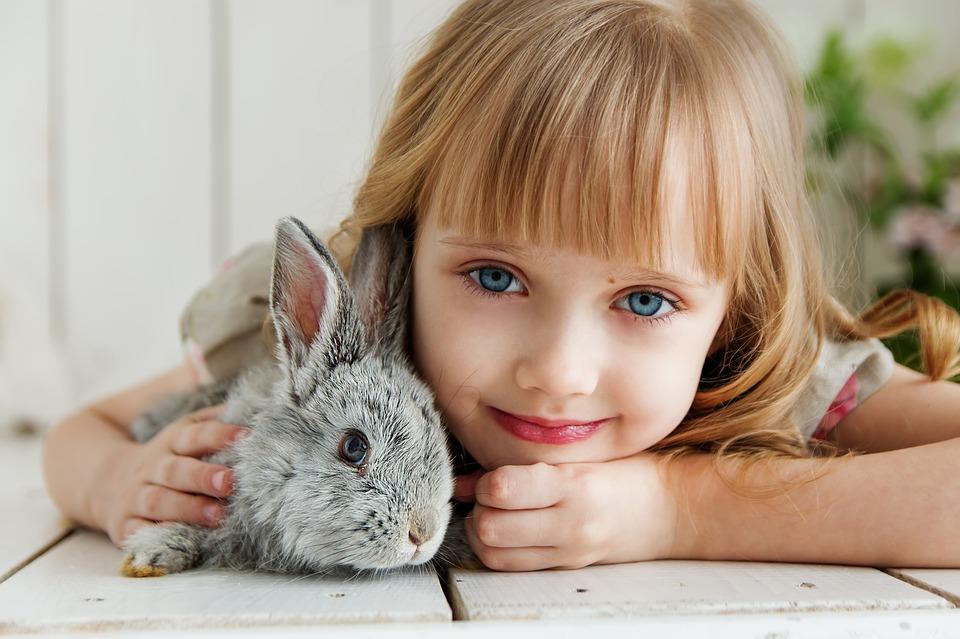 آموزش خرگوش