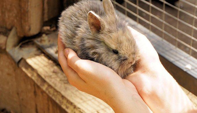 بغل کردن خرگوش