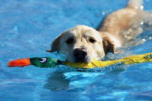 اسباب بازی شناور