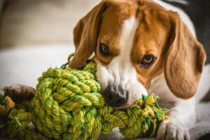 اسباب بازی سگ مدل طنابی