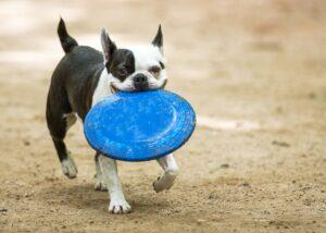 دیسک بازی سگ