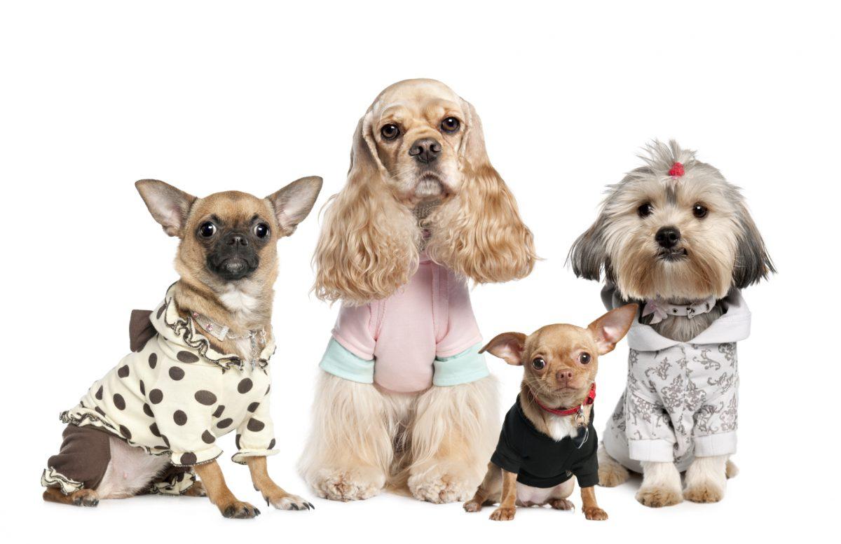 نژاد های مختلف سگ با لباس های متنوع