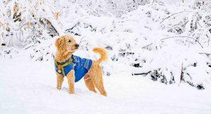 سگ با لباس ابی در کوهستان