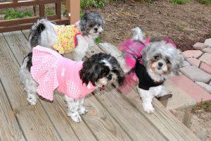 سگ های ماده با لباس های فانتزی