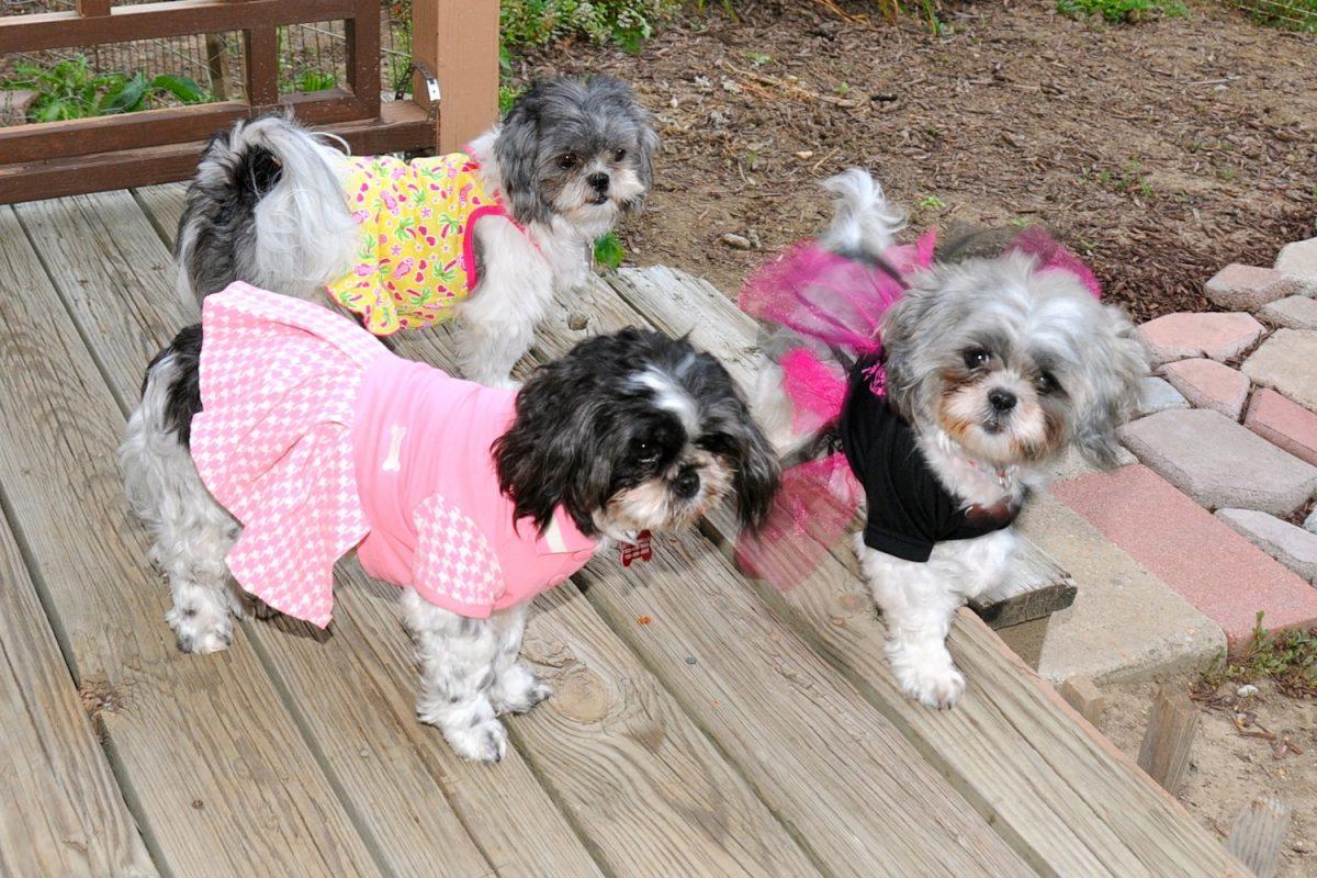 عکس لباس سگ دخترانه