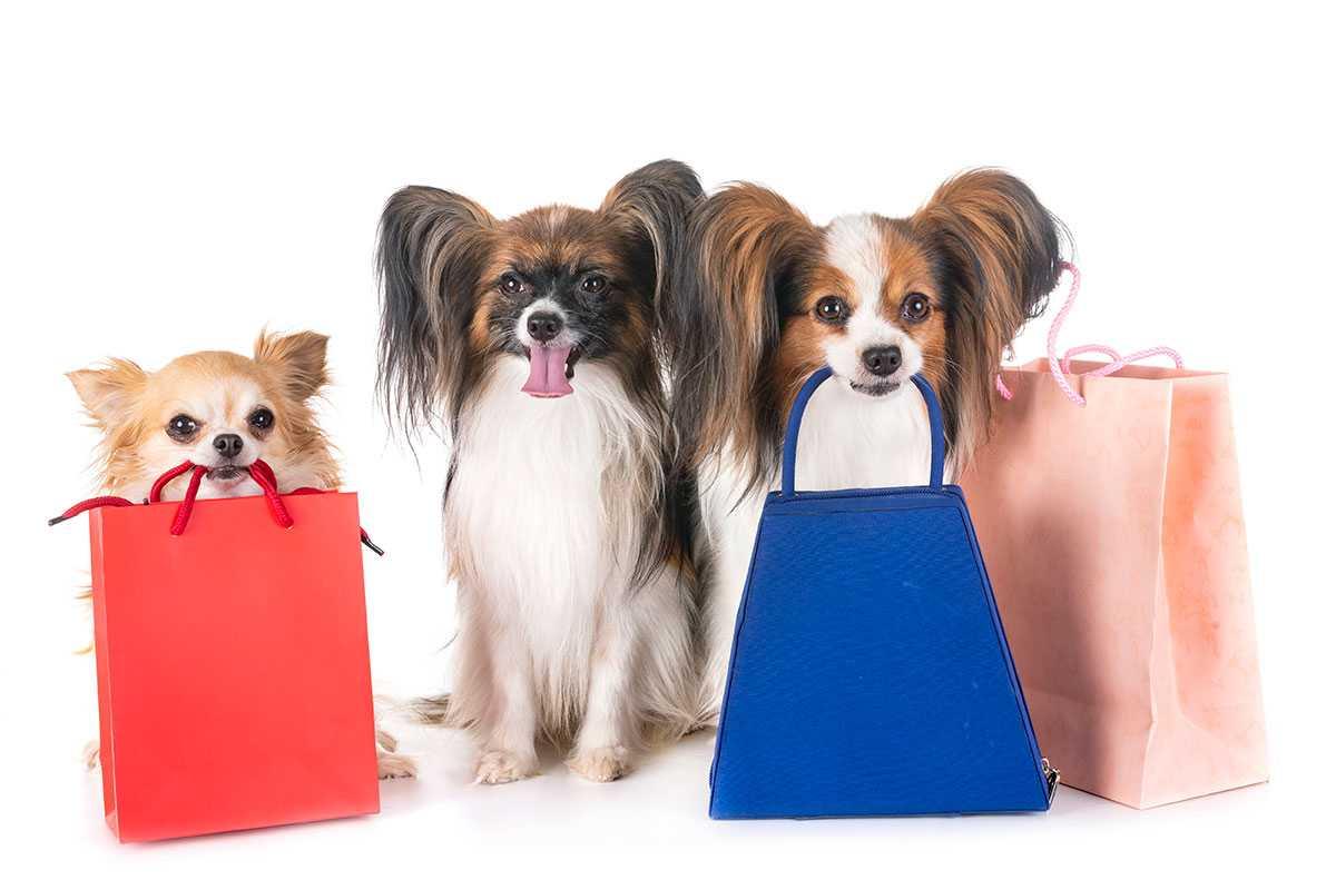 خرید کردن سگ ها