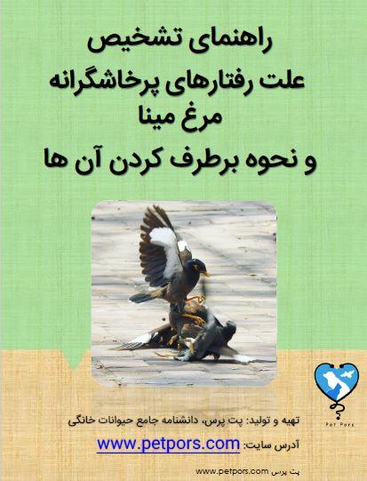 علل پرخاشگری مرغ مینا