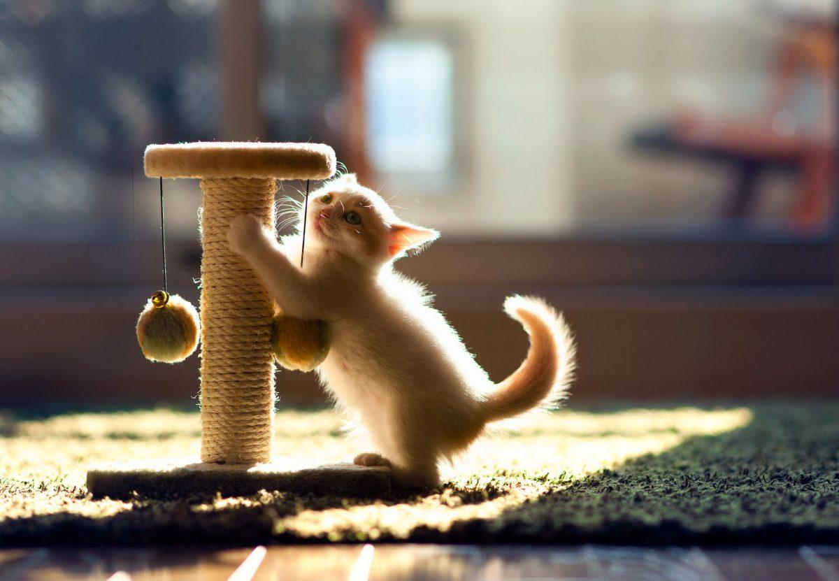 اسکرچر گربه و انواعش+ راهنمای خرید اسکرچر و لینک های مفید