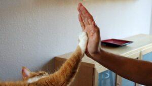 دست دادن گربه