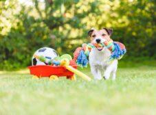 10 نوع اسباب بازی سگ پرطرفدار و پرکاربرد و نحوه بازی با آنها