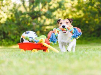 ۱۰ نوع اسباب بازی سگ پرطرفدار و پرکاربرد و نحوه بازی با آنها