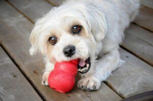 بازی کردن سگ با اسباب بازیش