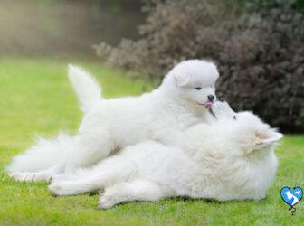 معرفی ۱۵ نژاد از زیباترین نژاد سگ در ایران و جهان