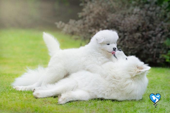زیباترین نژاد سگ