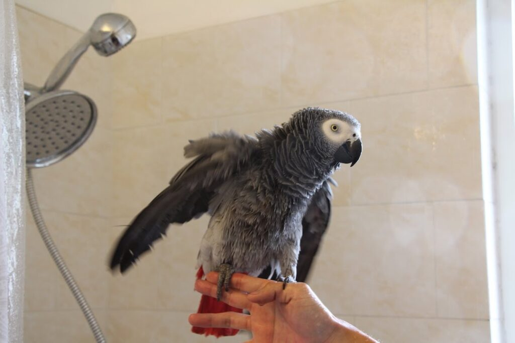 حمام کردن طوطی کاسکو سخنگو