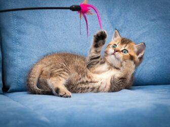 ۱۰ نوع اسباب بازی گربه پرکاربرد و پرطرفدار و نحوه بازی با آنها