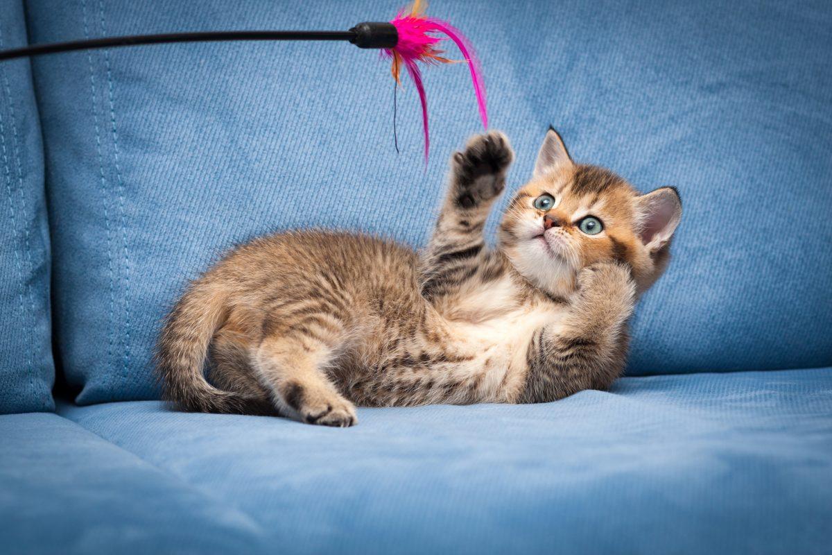 10 نوع اسباب بازی گربه پرکاربرد و پرطرفدار و نحوه بازی با آنها