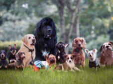 معرفی باهوش ترین نژاد سگ در دنیا + راهنمای آموزش سگهای باهوش
