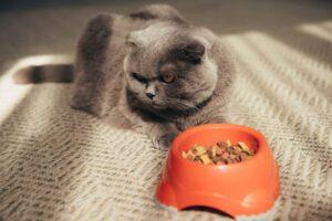 تغییر غذای گربه