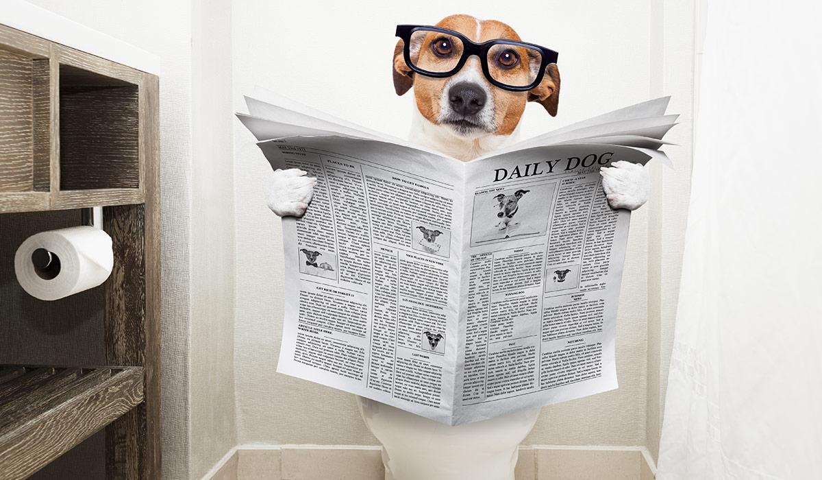 توالت سگ