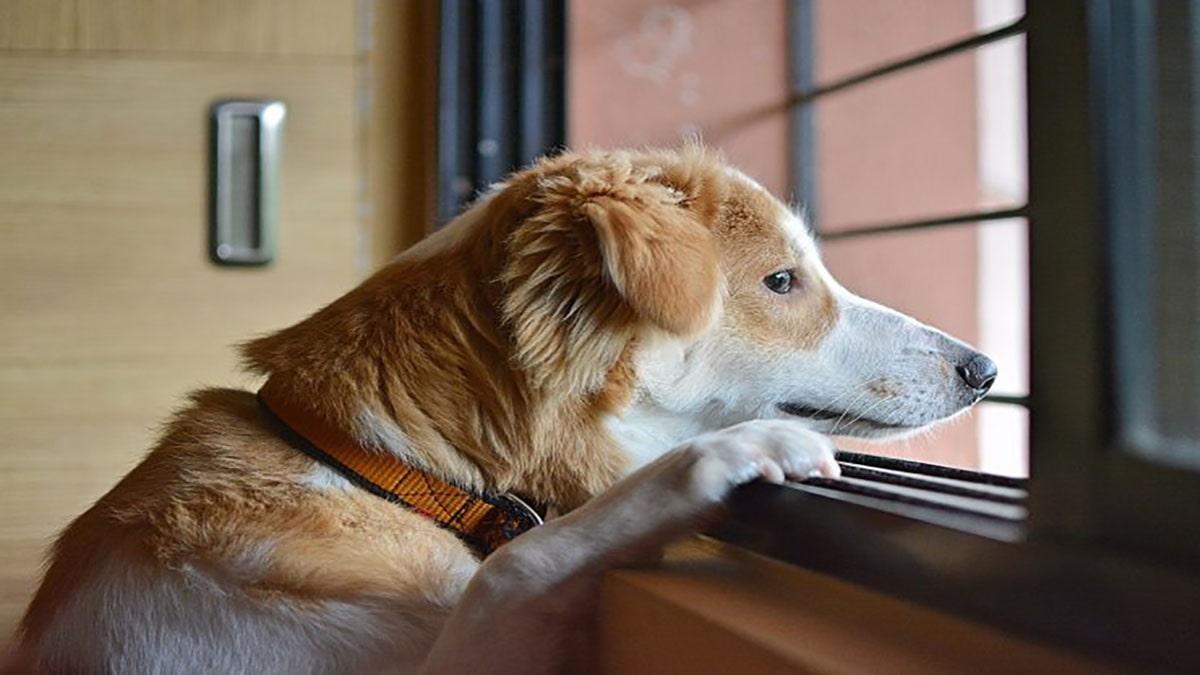 سگ های مناسب تنهایی در خانه