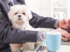 بهترین نژاد سگ برای تنها ماندن در خانه؛ سگهای مناسب زندگی کارمندی