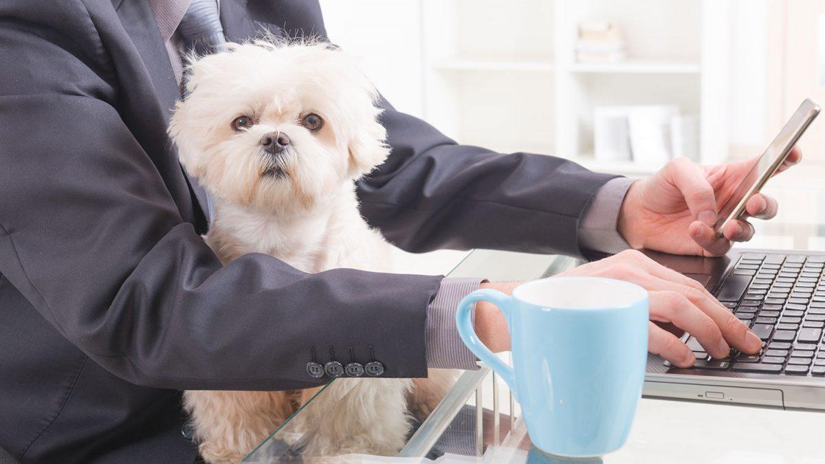 سگ مناسب کارمندان