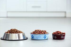 ظرف غذای سگ