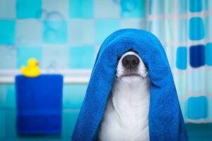 وسایل بهداشتی سگ